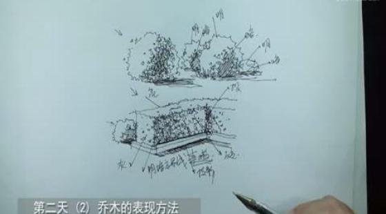 第四节,乔木植物的画法---景观初级手绘视频